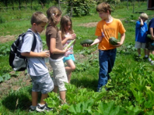 Kids picking vegetables