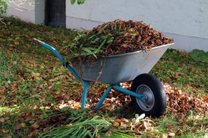 Wheelbarrow with leaves