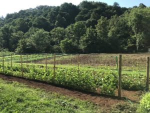Cover photo for Coffee and Conversation (Vegetable Gardening)