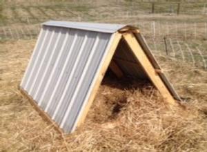A-Frame Pig Shelter