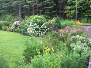 perennial garden with flowers blooming