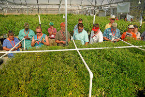 Tour group in hemp greenhouse
