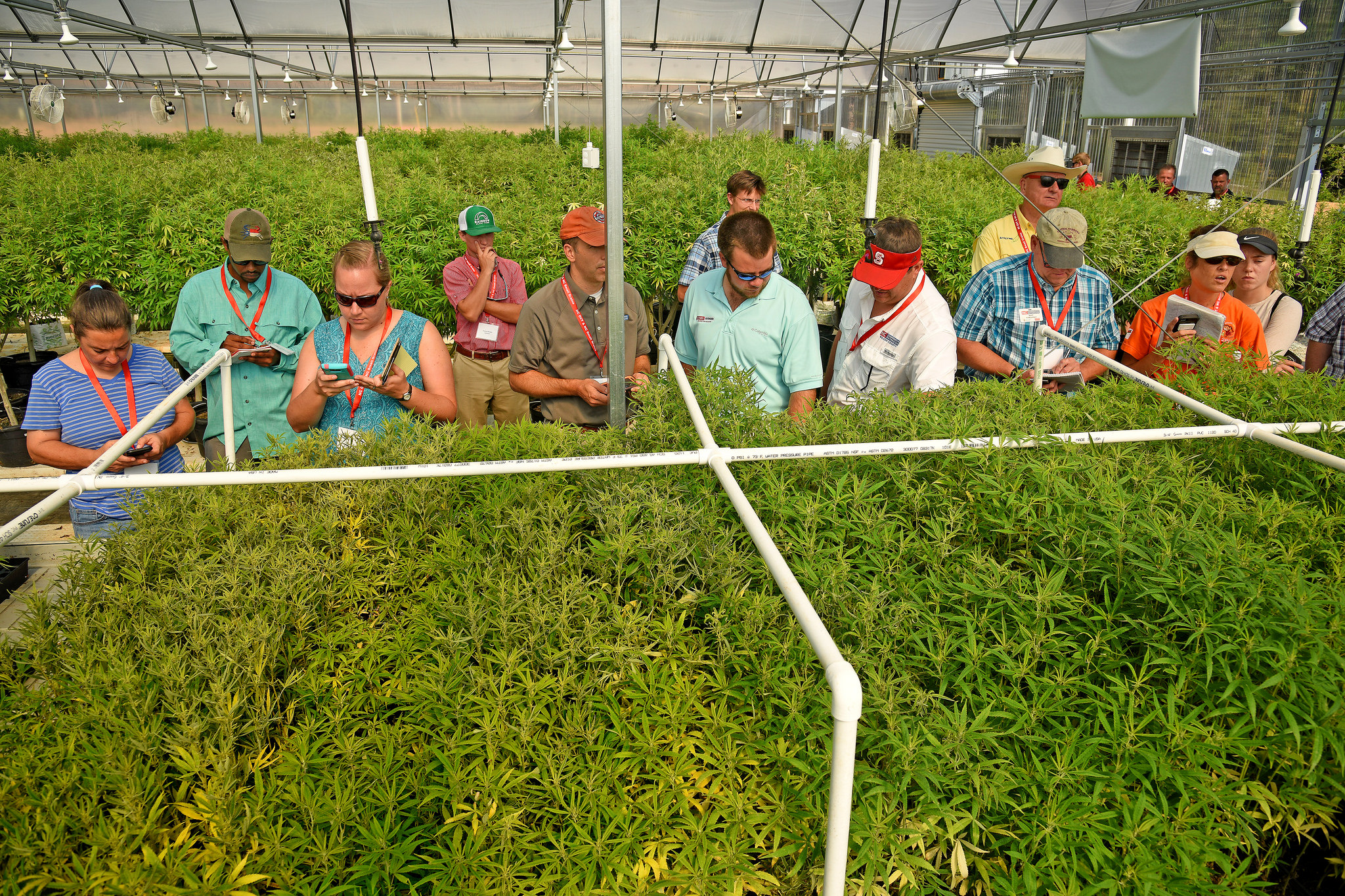 Tour group in hemp greenhouse