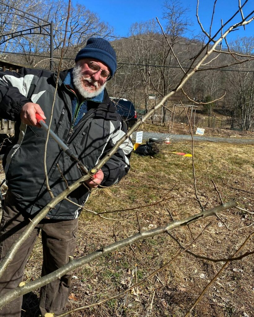 Image of a man pruning a dormant apple tree