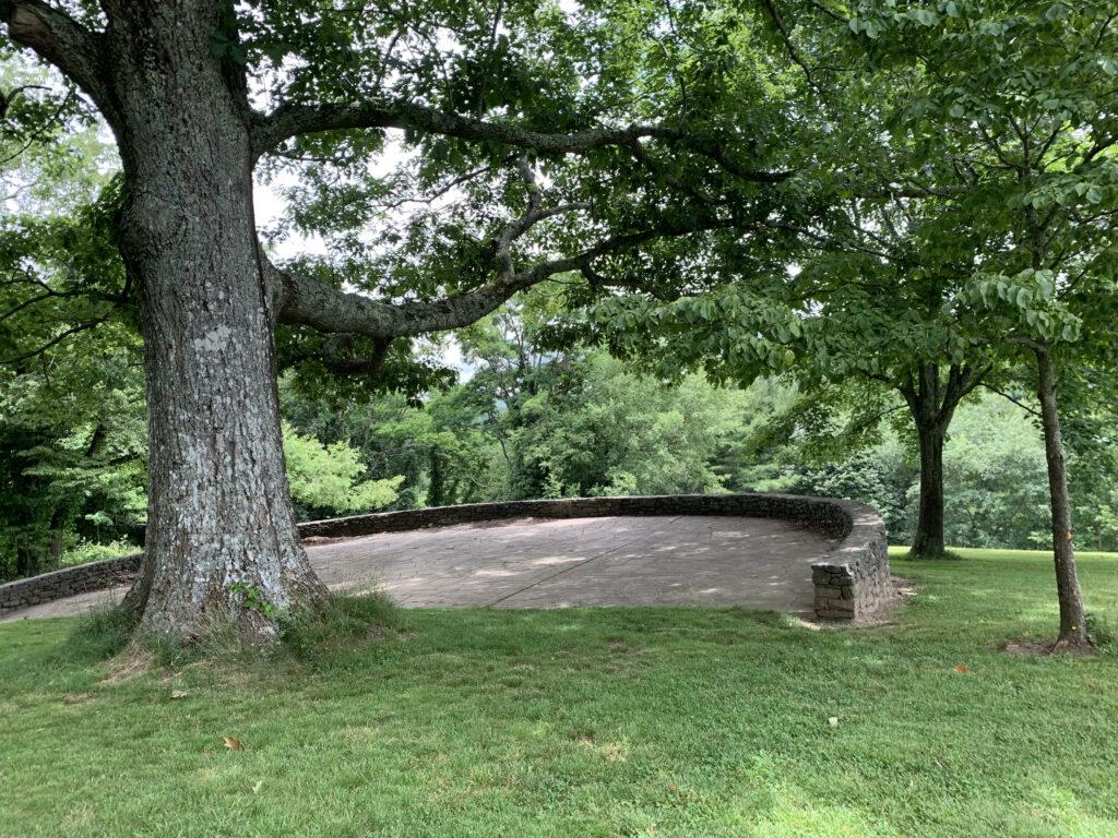 Tree in an arboretum