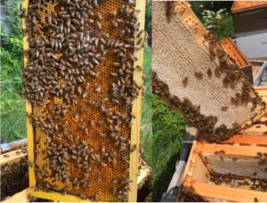 panels of honey & pollen